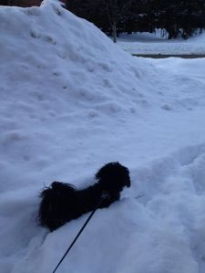 Here is my dog outside in the snow.. yeah, no idea when we're going to see the grass again.. hopefully it's still there!