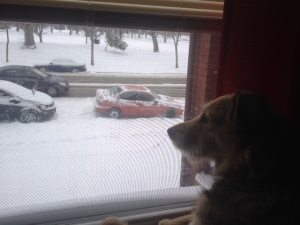 Even my puppy Lilli knows that its too snowy to run outside today.