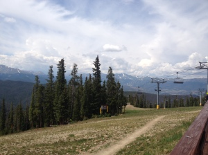 A view of the tall trees in the Rockies